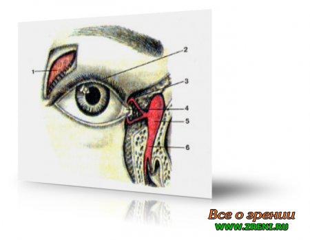 Строение глазного яблока на картинке