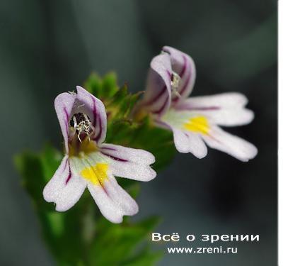 знакомство с однокласниками в белоруси
