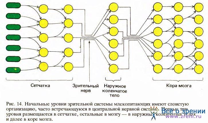 Импульсы, синапсы и нейронные