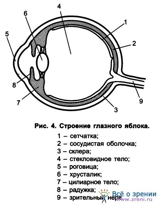 Оболочка капсула фото