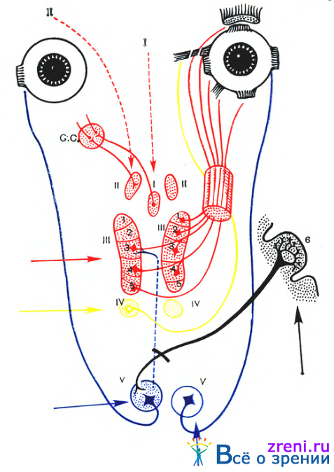 Схема расположения ядер