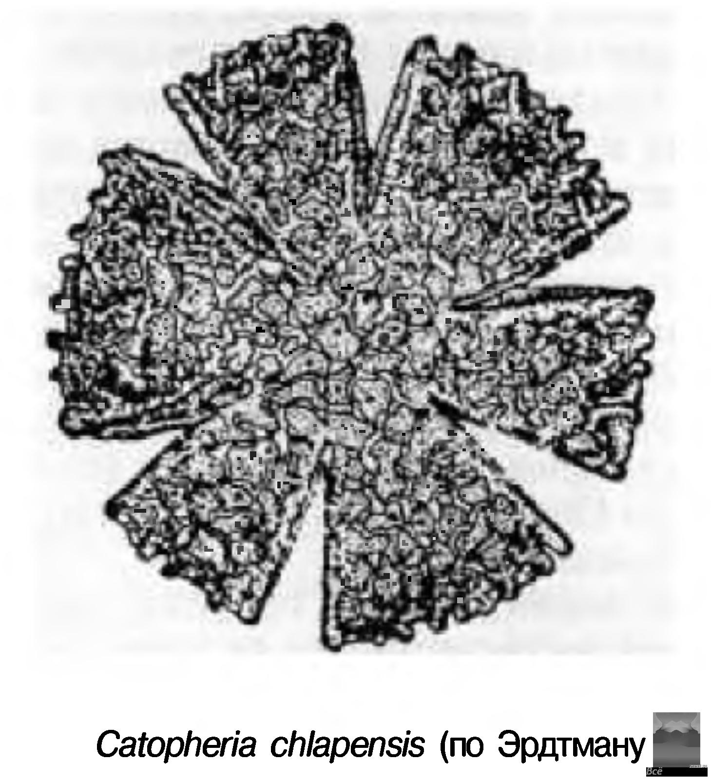 порошок от паразитов 4 буквы сканворд