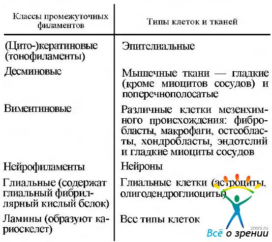 Цитоплазма и органоиды