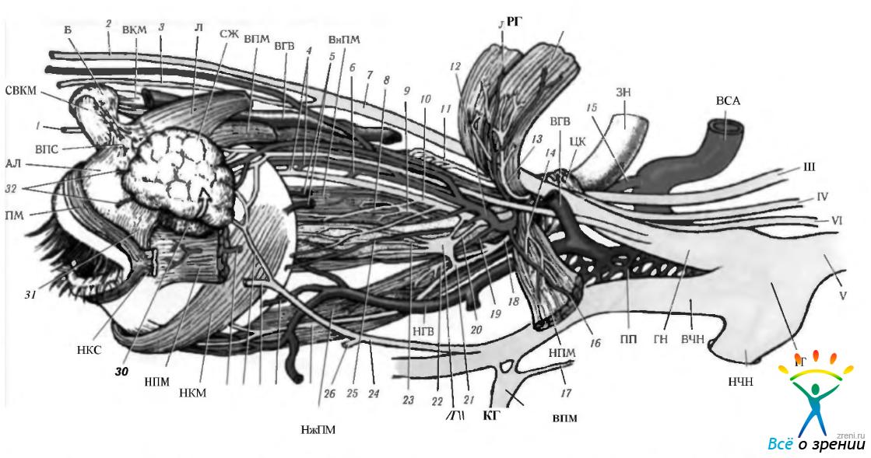 Нерв блоковой фото