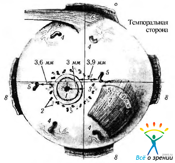 Капсула Тенонова