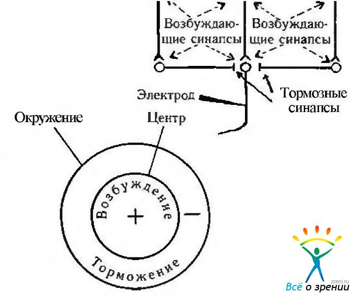 Схема обратных связей между