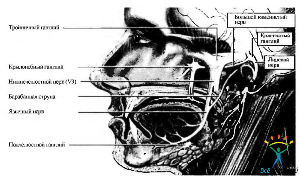 Синдром Рамсея Ханта фото