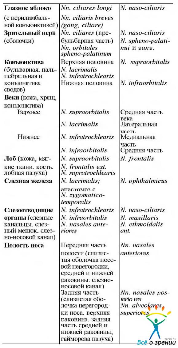 зона иннервации черепных нервов