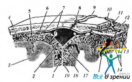 Цистерны основания мозга