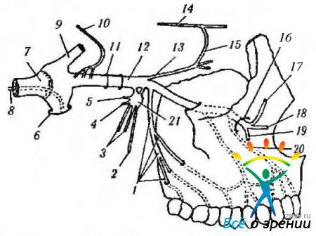 Воспаление тройничного нерва фото симптомы и лечение