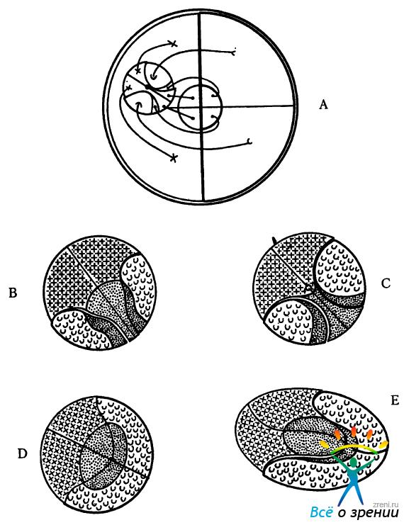 Схема хода волокон в