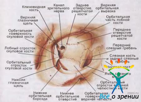 Народные лечение от болей в суставах