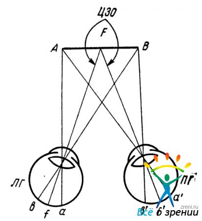 Схема бинокулярного восприятия