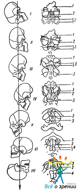 термобелье рентгенолгические исследование придаточных пазух носа побороть