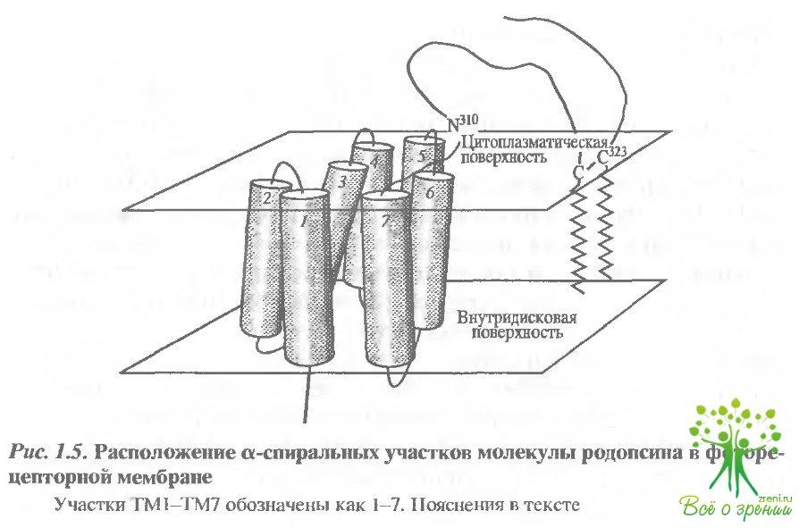 Родопсин