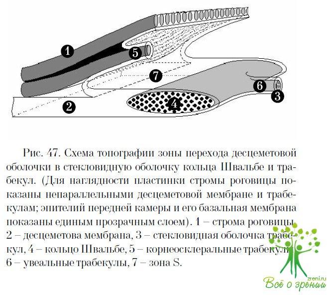 Мембрана стекловидная фото