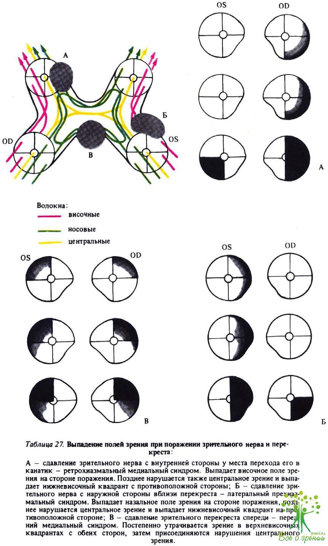 Схема границ поля зрения